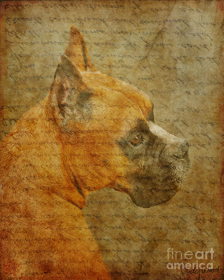 Dog Digital Art - Do You Remember Me? by Judy Wood