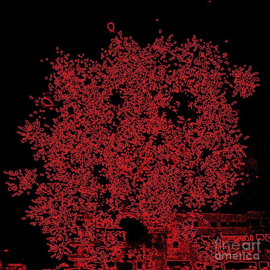 Fireworks Photograph - Do You See Me by Shelia Kempf