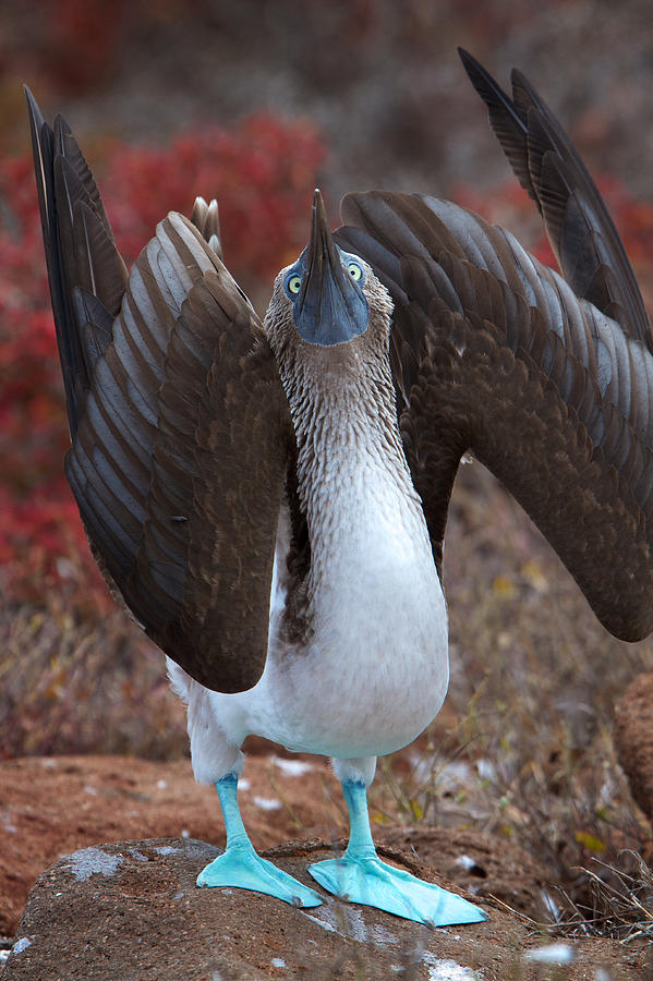 Galapagos Islands Photograph - Do You Think Im Sexy by David and Patricia Beebe