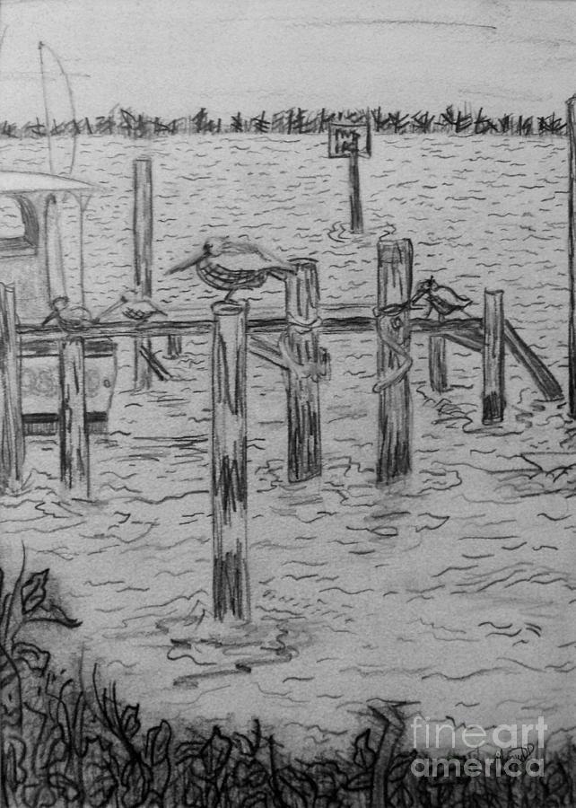 Birds Drawing - Dock Sketch by Megan Dirsa-DuBois