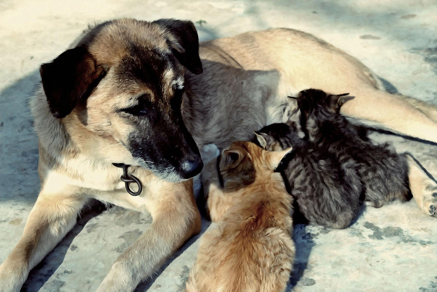 Dog Adopts Kittens Painting - Dog Adopts Kittens by Lanjee Chee