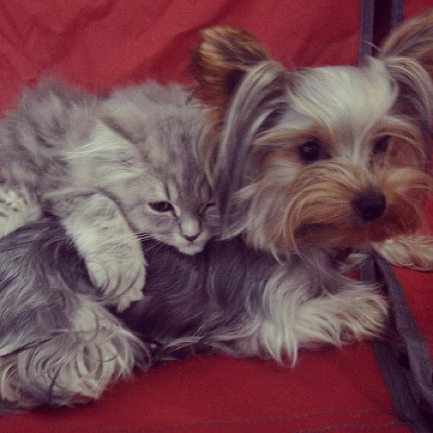 Mascotas Photograph - Dog and cat friends by Ana V