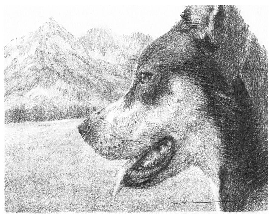 Dog And Mountains Pencil Portrait Drawing by Mike Theuer