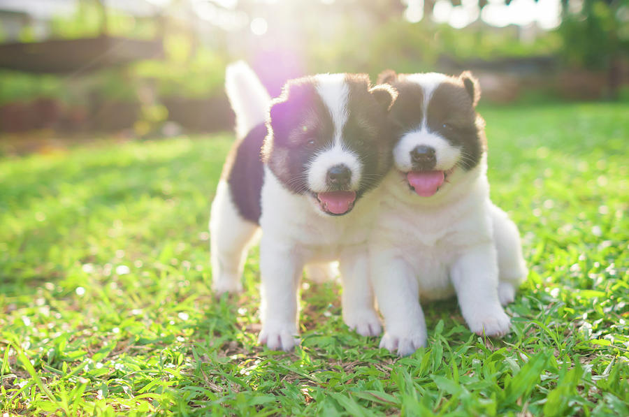 Dog And Puppies Photograph by Primeimages