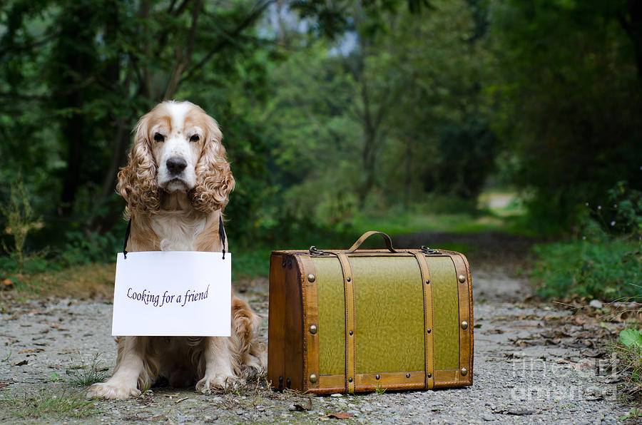 Dog And Suitcase Photograph by Mats Silvan