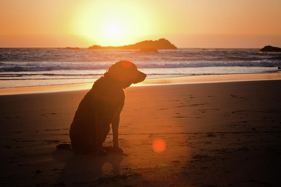 Dog At Beach Photograph by Christopher Kimmel