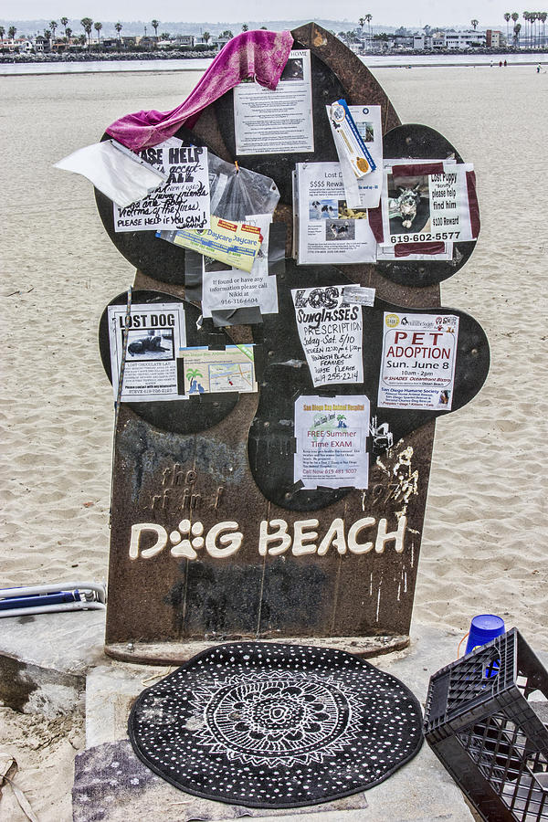 Dog Beach Digital Art - Dog Beach  by Photographic Art by Russel Ray Photos