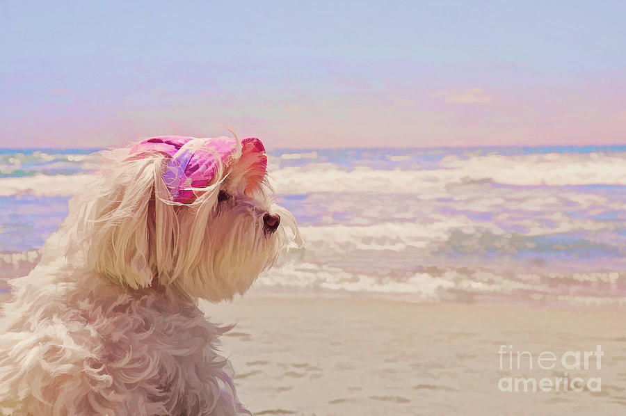 Dog Days of Summer by Andrea Auletta
