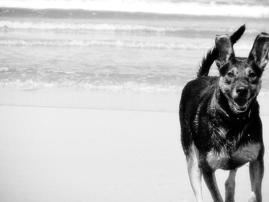 Dogs Photograph - Dog Days Of Summer by Donna Miller