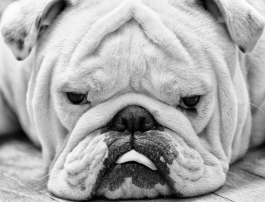 Dog Face Photograph by Jody Trappe Photography
