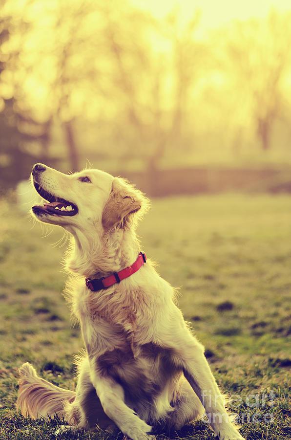 Dog Pyrography - Dog In The Park by Jelena Jovanovic