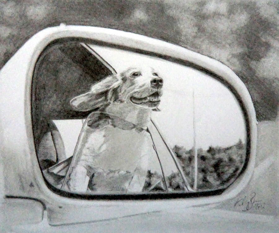 Car Mirror Drawing - Dog In The Window by Skyrah J Kelly