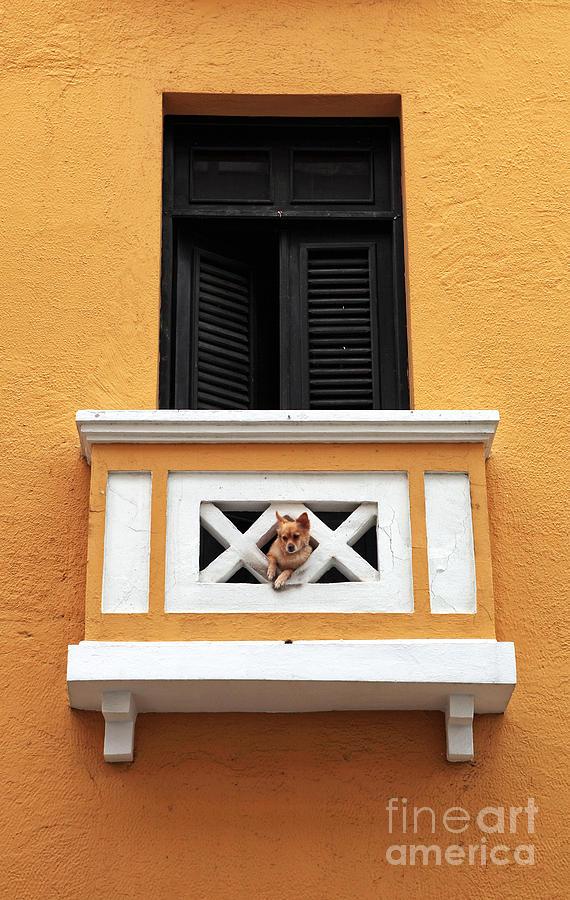 Dog Photograph - Dog by John Rizzuto
