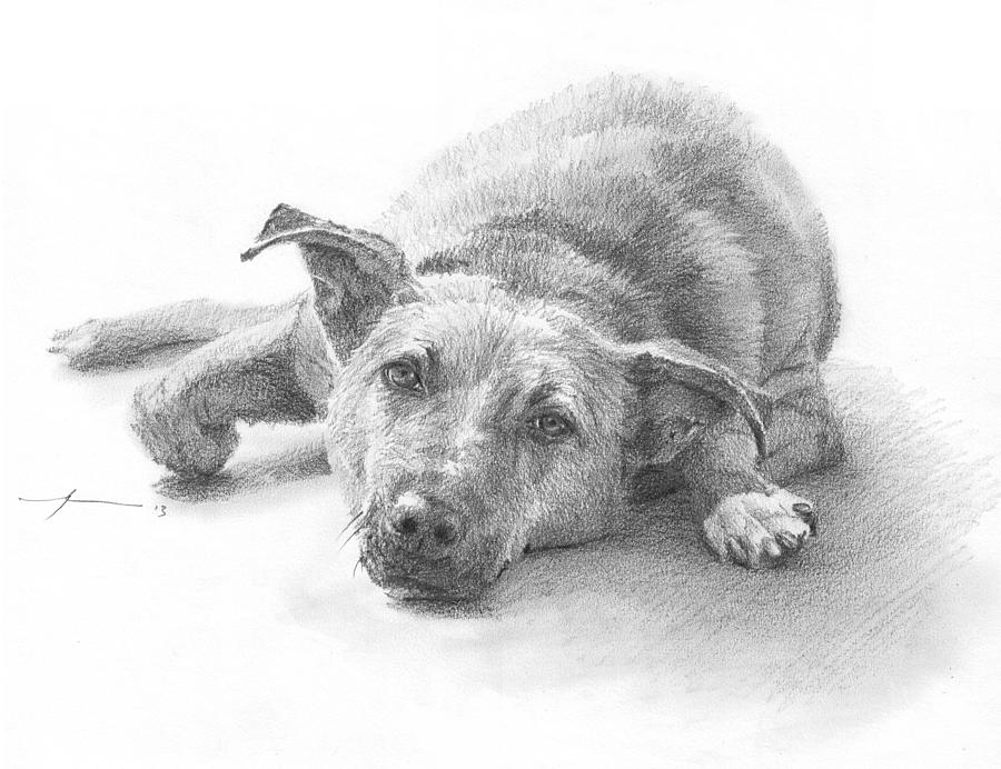 Dog Lazing Pencil Portrait Drawing by Mike Theuer