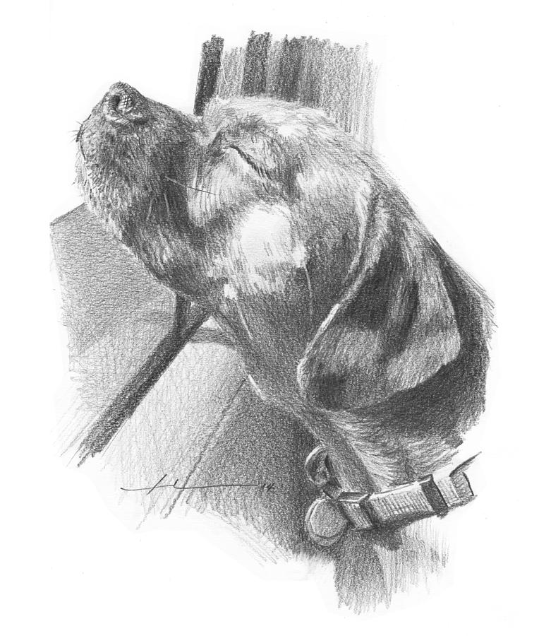 window pencil drawing. dog out car window pencil portrait drawing by mike theuer o