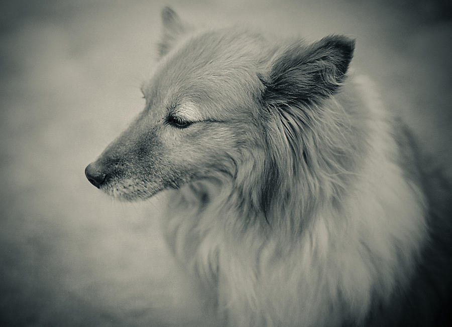 Photograph - Lonely Dog by Pro Shutterblade