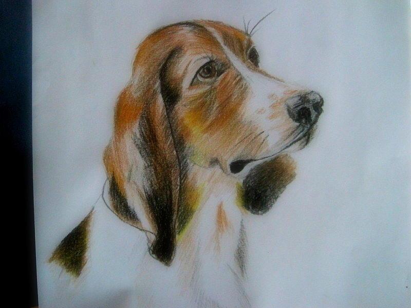 Color Pencil Drawing - dog by Ram Prasad