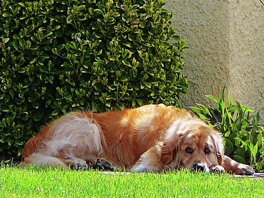 Dog Photograph - Dog Relaxing by Susan Savad