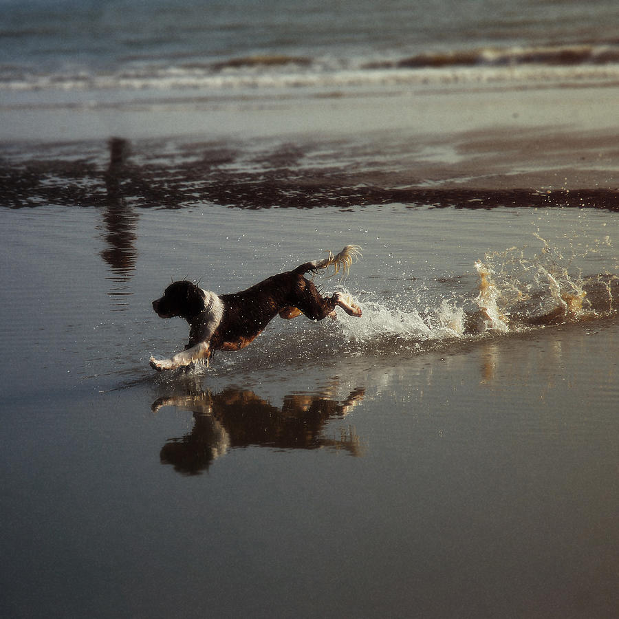 Dog Photograph - Dog Running by John Magnet Bell