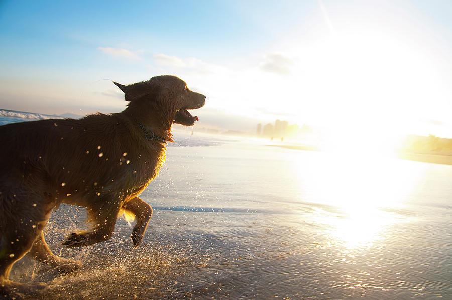 Dog Running On The Beach Photograph by Giovani Cordioli