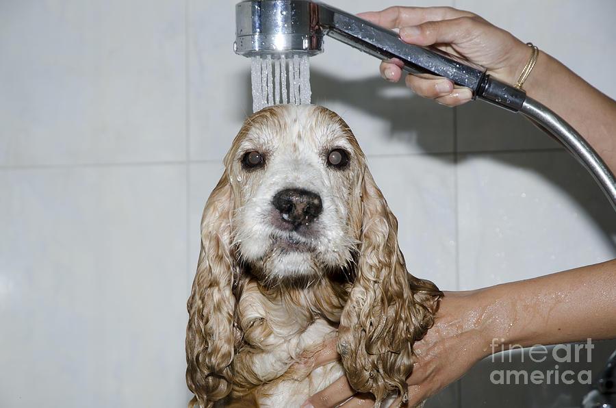 Dog Photograph - Dog Taking A Shower by Mats Silvan