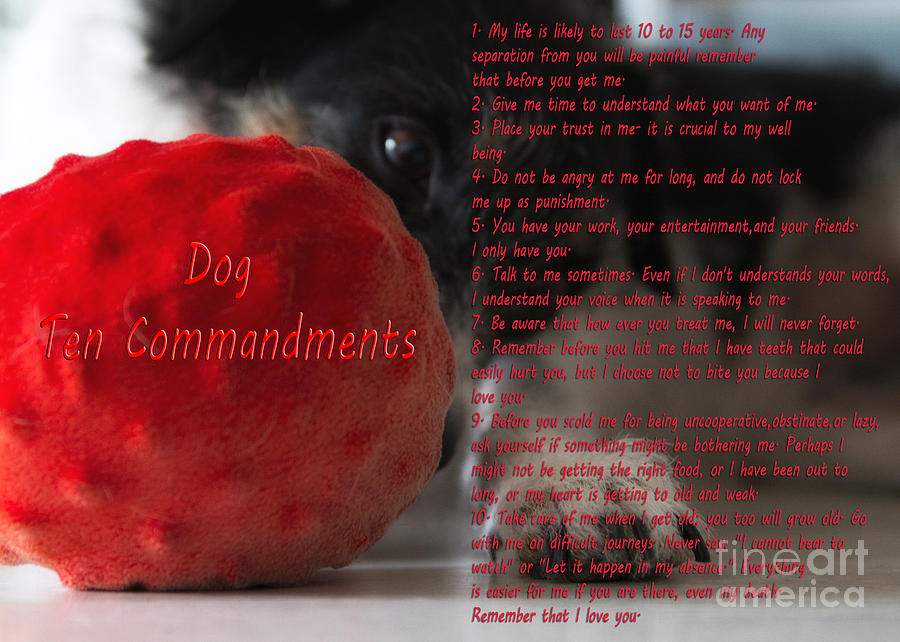 Adorable Photograph - Dog Ten Commandments by Stelios Kleanthous