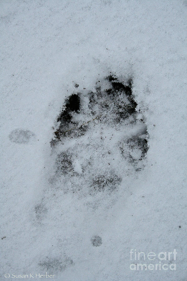 Outdoors Photograph - Dog Was Here by Susan Herber
