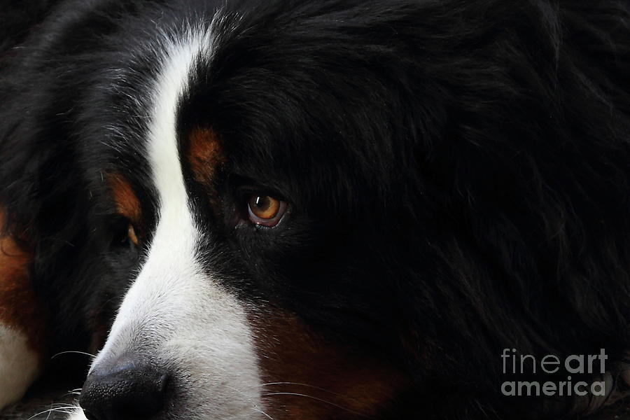 Dog Photograph - Dog by Wingsdomain Art and Photography