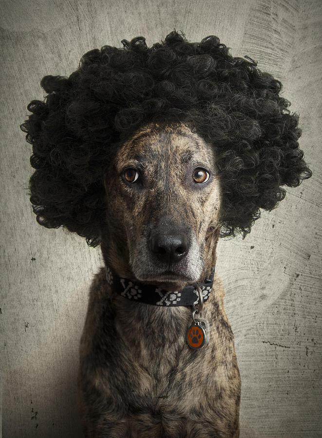 Canine Photograph - Dog With A Crazy Hairdo by Chad Latta