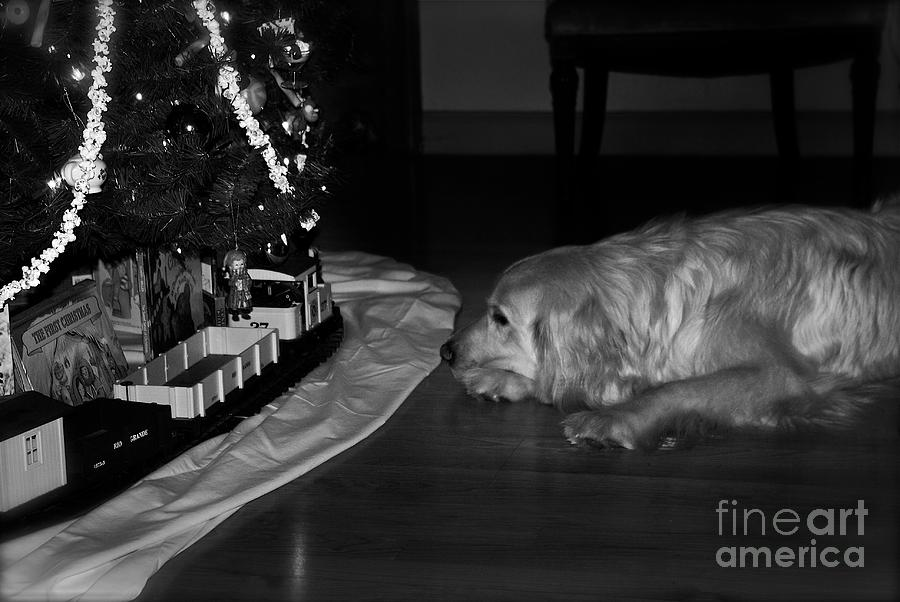 Christmas Cards Photograph - Dog with Christmas Train by Frank J Casella