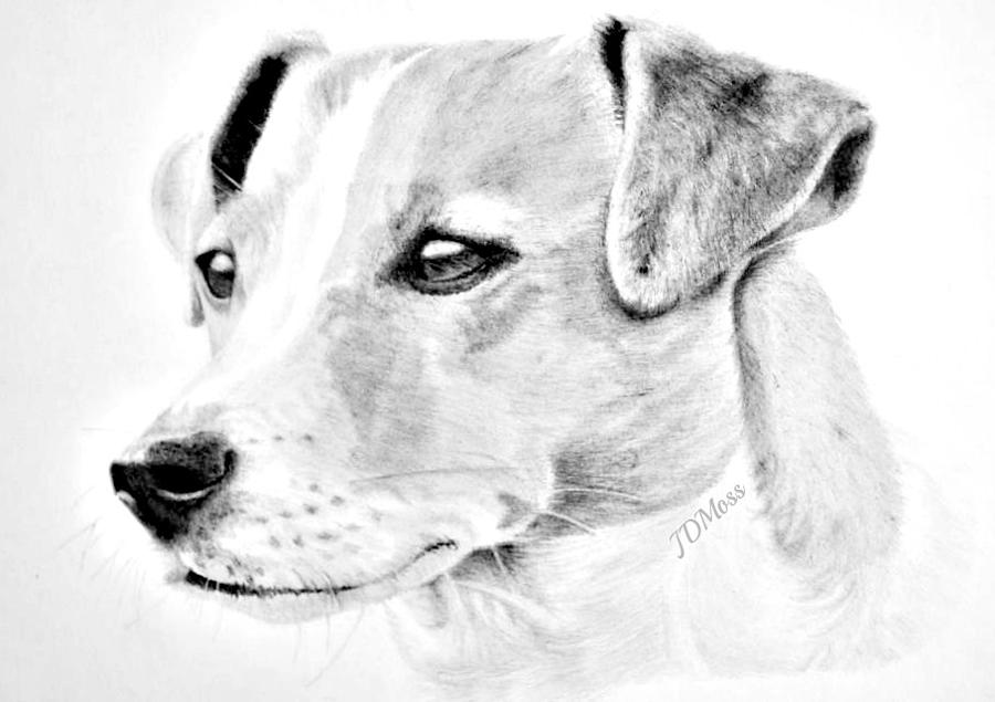 Dog Drawing - Doggie by Janet Moss