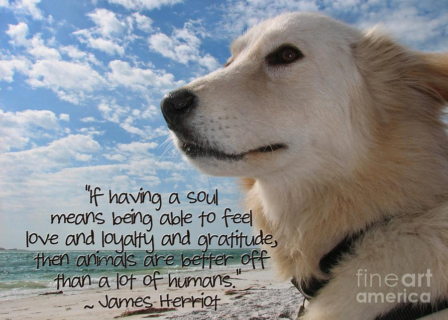 Dog Photograph - Doggie Soul by Peggy Hughes