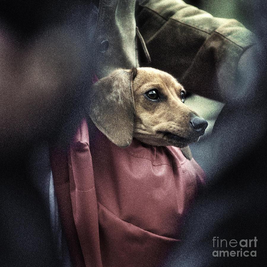 Dog Photograph - Doggies Bag by Michel Verhoef