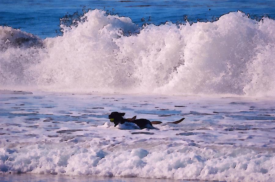 Barbara Snyder Digital Art - Dogs At Carmel California Beach by Barbara Snyder