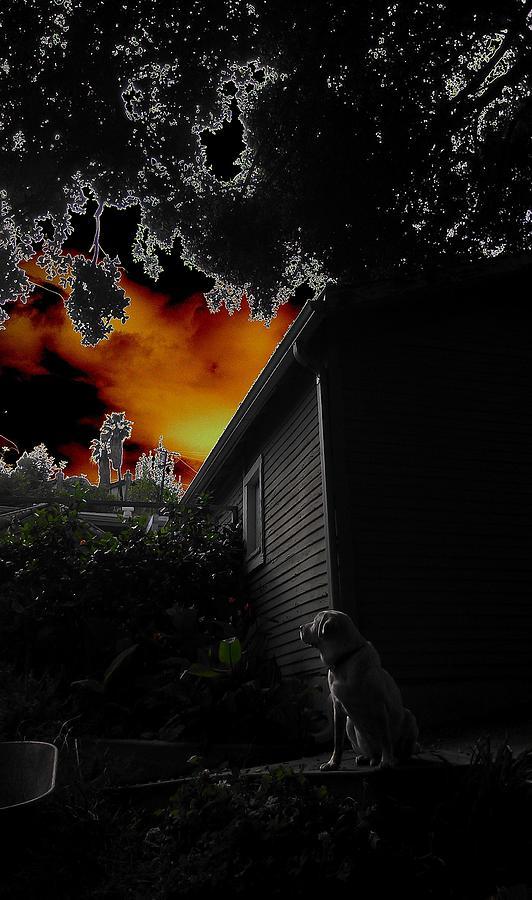Dog Photograph - Dogs Dreamlike Eve by Carolyn Olney