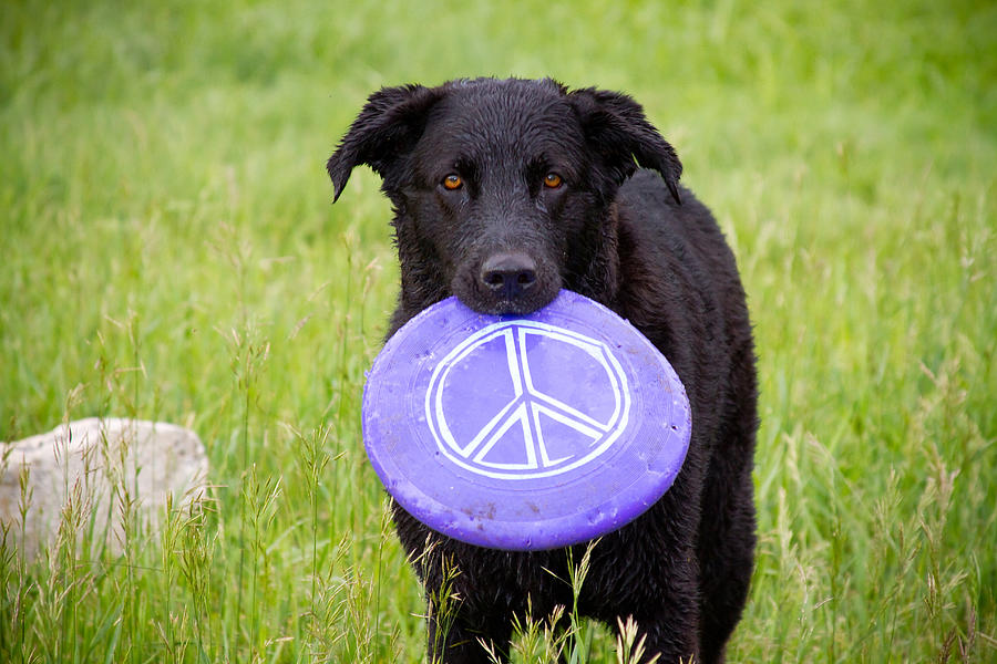 Dog Photograph - Dogs For Peace by James BO  Insogna