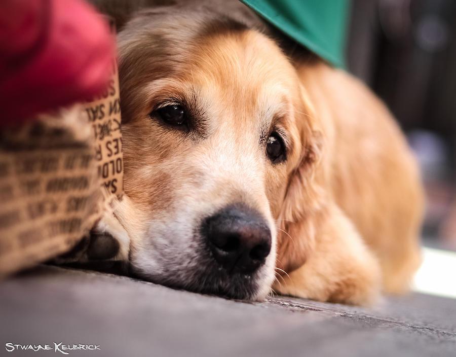 Coronavirus Photograph - Dogs sorrow by Stwayne Keubrick