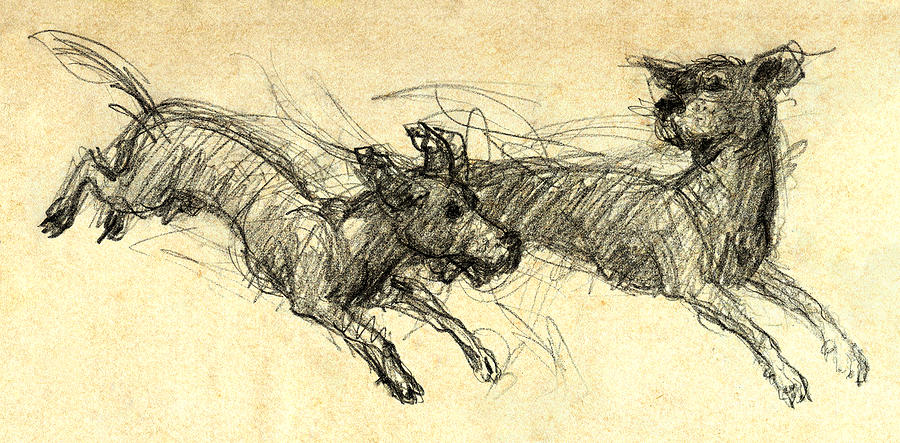 Dogs Drawing - Dogsketch by Nato  Gomes