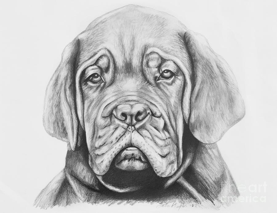 Pencil Drawing - Dogue De Bordeaux Dog by Lena Auxier