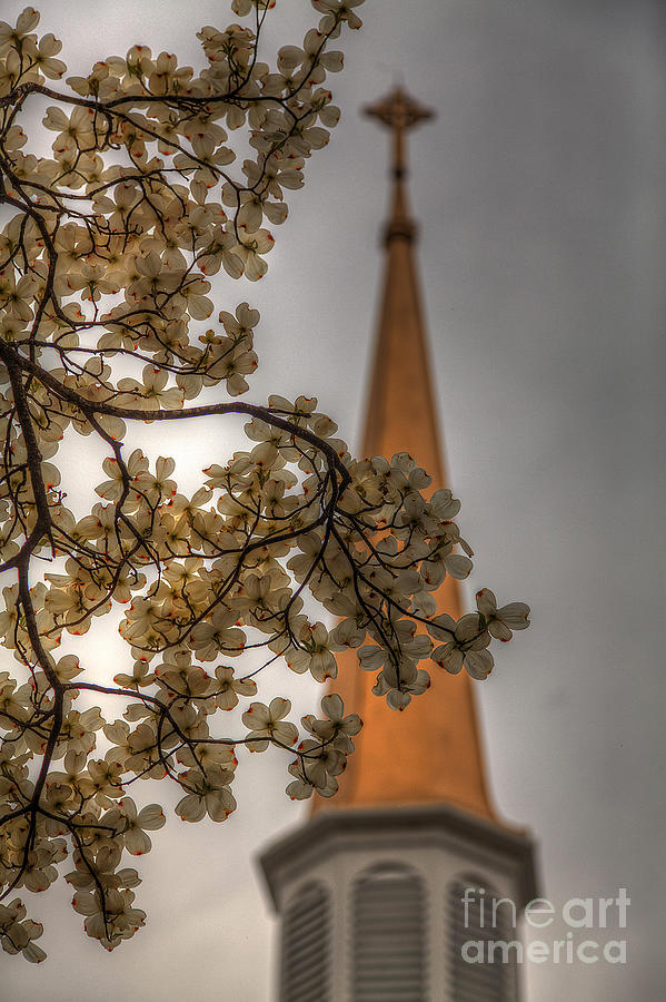 2014 Photograph - Dogwood Blooms And Steeple by Larry Braun