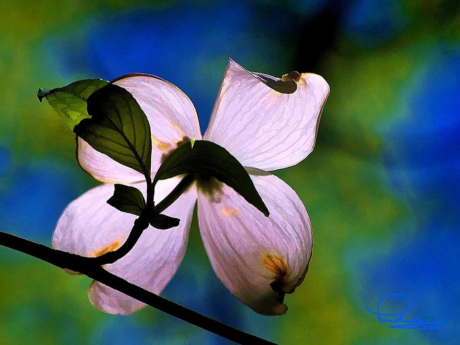 Dogwood Blossom by Ludwig Keck