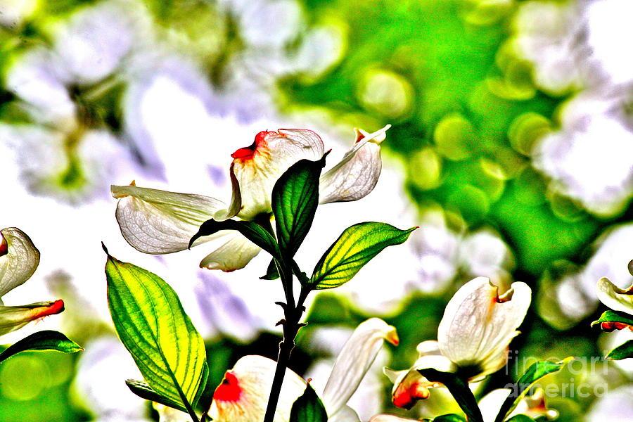 Spring Photograph - Dogwood Impressions Iv by Jay Nodianos