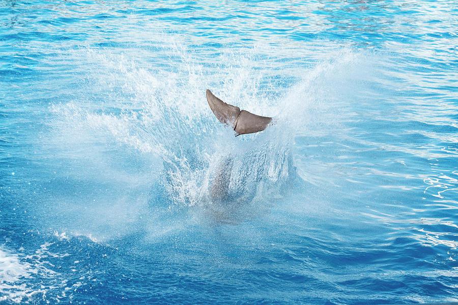 Dolphin Jump Photograph by Ultramarinfoto