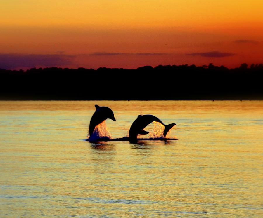 Topsail Island  - Dolphin Serenade by Karen Wiles