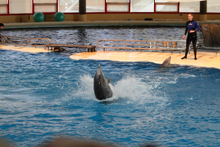 Dolphin Show National Aquarium In Baltimore Md 1212102 Photograph By Dc Photographer