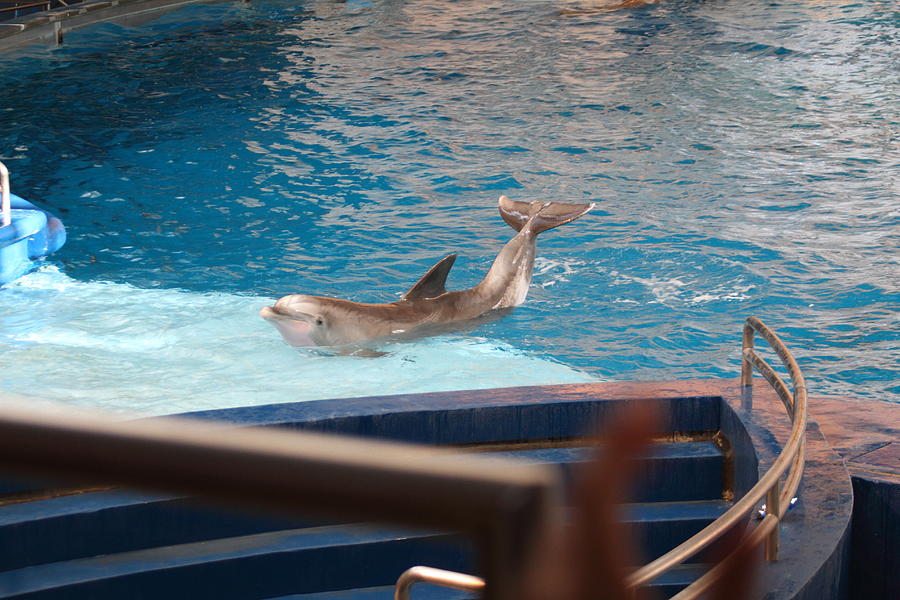 Dolphin Show National Aquarium In Baltimore Md 1212104 Photograph By Dc Photographer