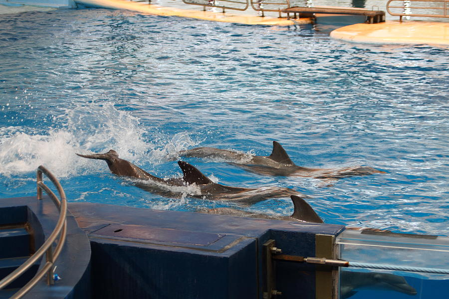 Inner Photograph - Dolphin Show - National Aquarium In Baltimore Md - 1212187 by DC Photographer