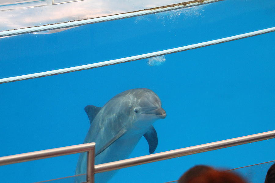 Dolphin Show National Aquarium In Baltimore Md 1212191 Photograph By Dc Photographer