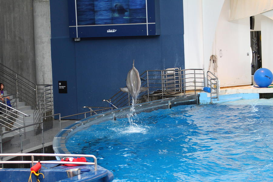Dolphin Show National Aquarium In Baltimore Md 1212201 Photograph By Dc Photographer
