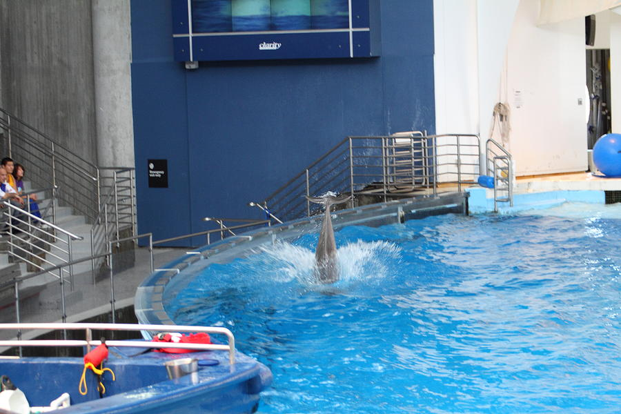 Inner Photograph - Dolphin Show - National Aquarium In Baltimore Md - 1212204 by DC Photographer